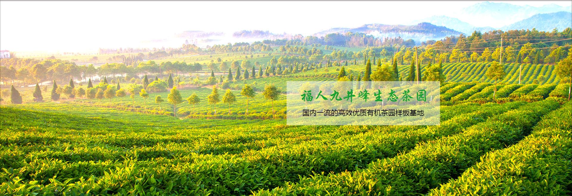 湖北有机绿茶